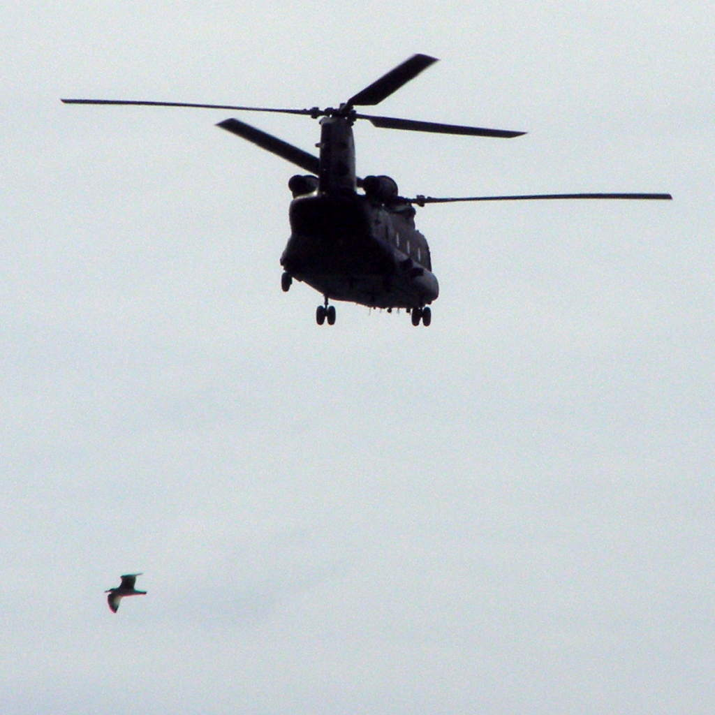 Chinook helicopter and a sea bird